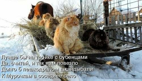 http://2012god.ru/wp-content/uploads/forum/%D0%BA%D0%BE%D1%82%D1%8B%D0%BD%D0%B0%D0%B4%D1%80%D0%BE%D0%B2%D0%BD%D1%8F%D1%85.jpg